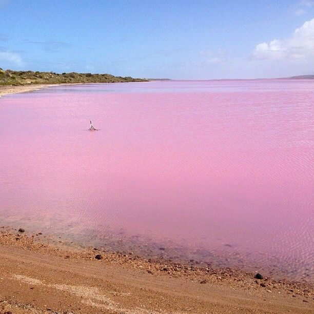 Western Australia, pink lake caused by algae combined with a certain salinity level.   Have been here and it is beautiful!