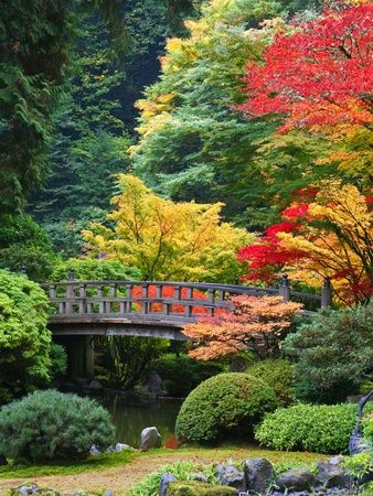 gardening with colour...    Bridge in Japanese Garden
