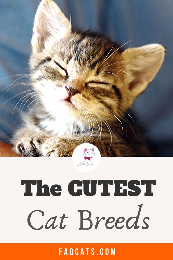 Cute Cat Breeds And Kittens In 2020 Cute Cat Breeds Cat Breeds Cute Cats And Kittens