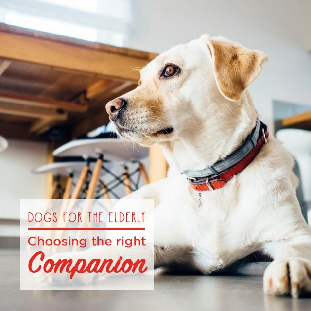 Everyone knows that a dog is one's best friend! In this week's blog, discover which four-legged friend makes the right companion for the elderly - simply click on the photo :)