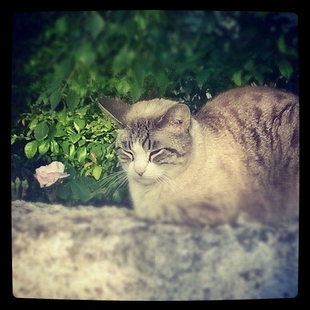 """""""E il gatto ch'è per noi sempre in agguato"""" #semprecaromifu @Futura Festival Civitanova Marche #scritturebrevi @fchiusaroli"""