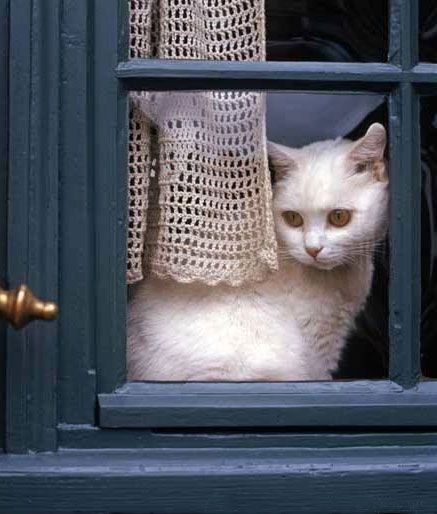 (via Chat à la fenêtre ~ Cat at the window | Rustic and Country Charm ~ Fr…)