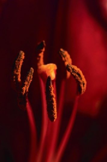 Twenty steps from root to red, months turned into years, the Madder slowly found