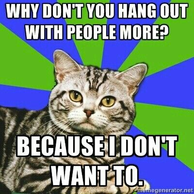 Introvert cat - Because I don't want to.