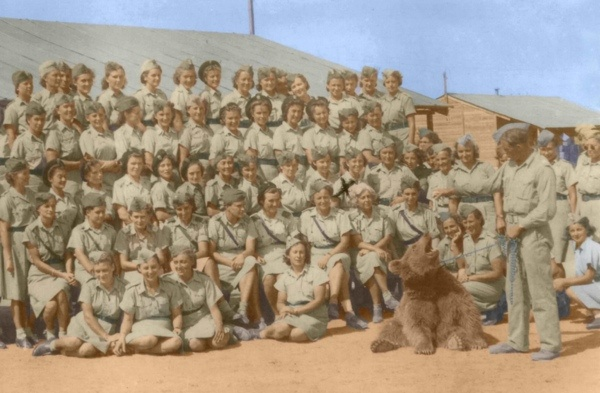 A Polish artillery supply company  adopted a brown bear cub and named him Wojtek. When the company was deployed to support the British in the Italian campaign, pets weren't allowed. The Polish force officially enlisting Wojtek as a private. During the Battle of Monte Cassino, he carried ammunition along and never dropped a crate.  Wojtek the Soldier Bear survived the war and moved to the Edinburgh Zoo, which is apparently the go-to home for military animals of all countries.