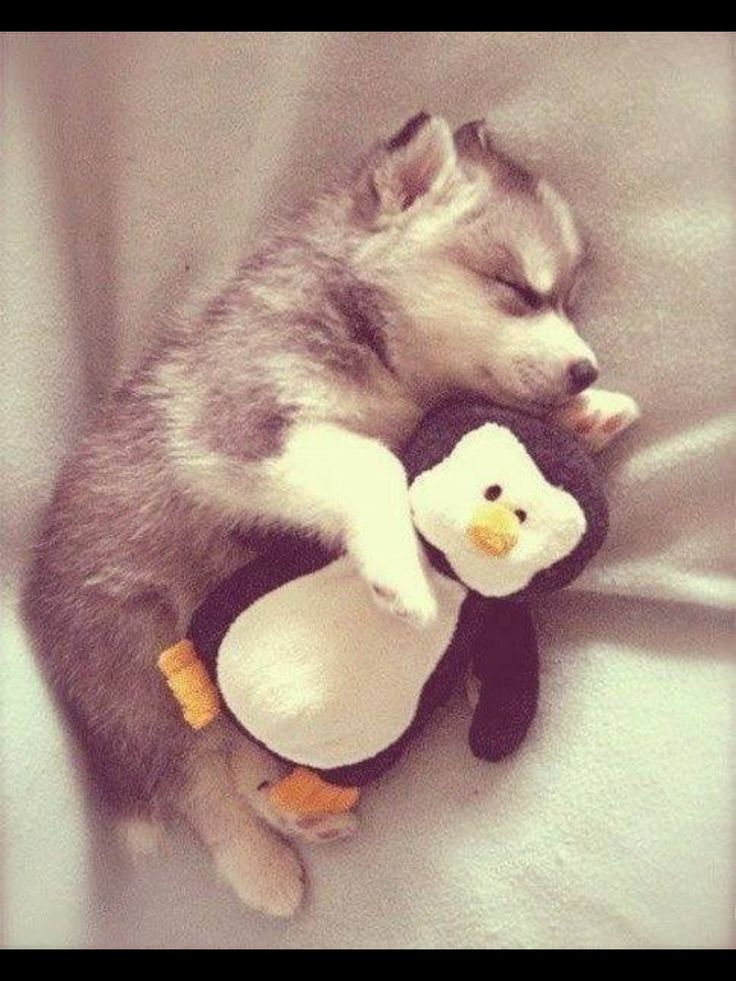 OMG!!!! I'm obsessed with huskies and penguins!!!!!