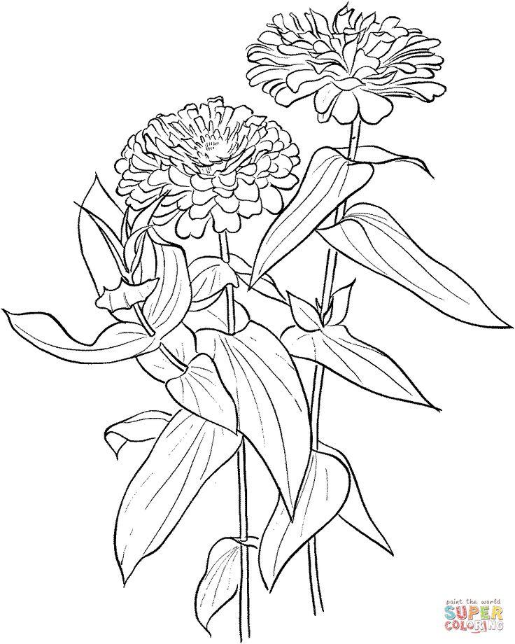 Zinnia Elegans coloring page Flower