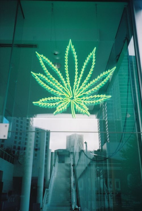Neon green weed leaf light sign.