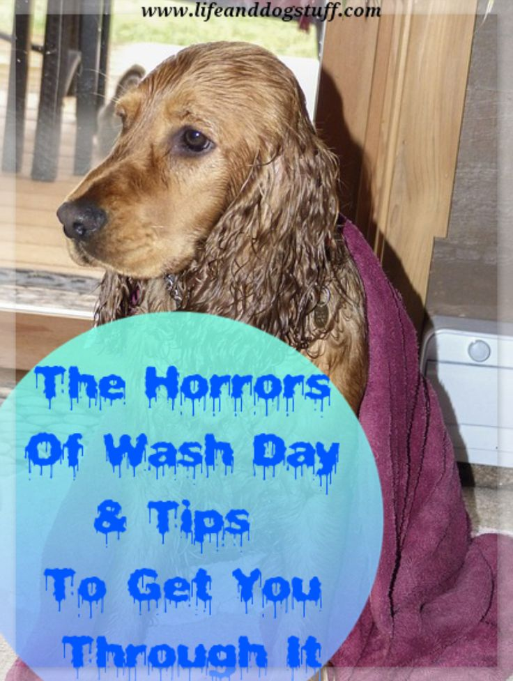 The Horrors of Wash Day and 9 Tips to Get You Through It #dogs #blog