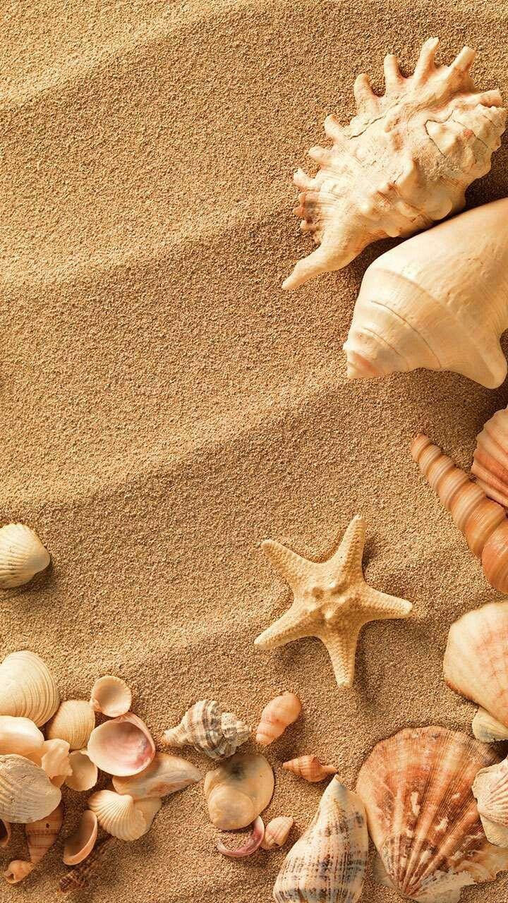 этих красивые картинки про море и ракушки говорят, что лучшие