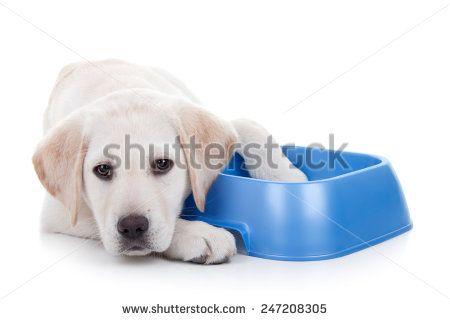Zvířata/Život v divočině Fotografie na skladě : Shutterstock Fotografie