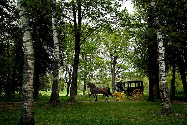 Horse and Carriage ride through the interior of Mackinac Island. #puremichigan
