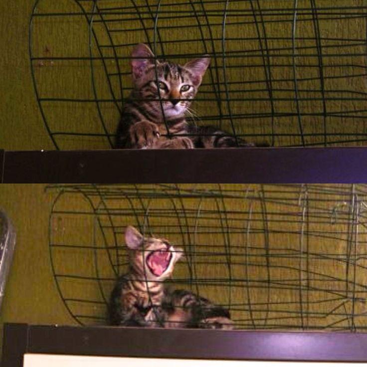 Dio ha creato il gatto per procurare all'uomo la gioia di accarezzare la tigre. Schizzo <3