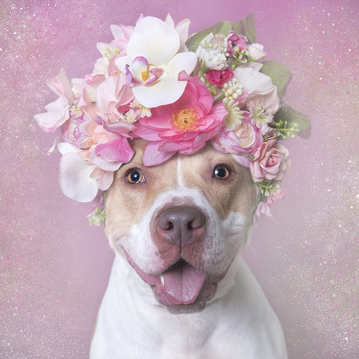 Flower Power: Making Fine Art Portraits with Pit Bulls | Sophie Gamand