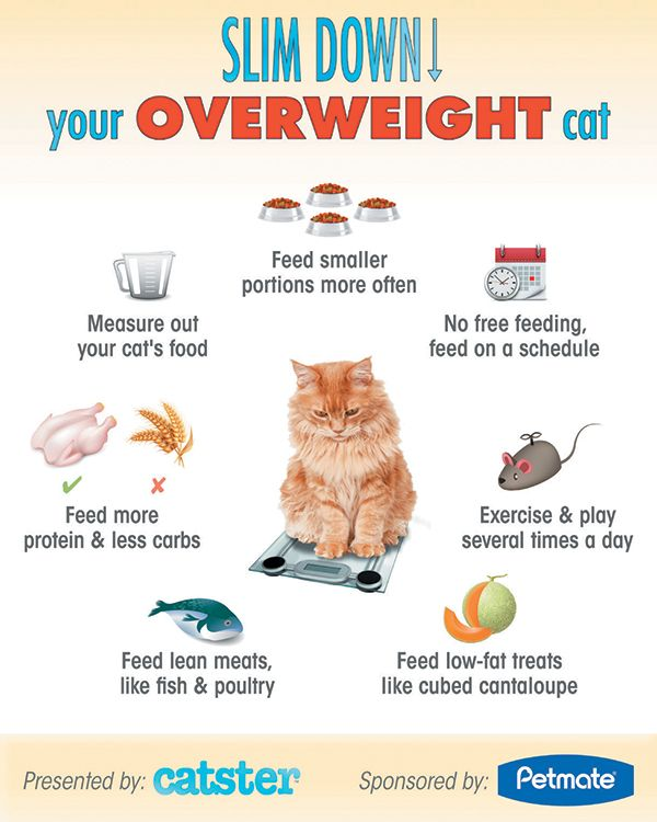 5 Health Risks For Overweight Cats How To Slim Down Cat Health