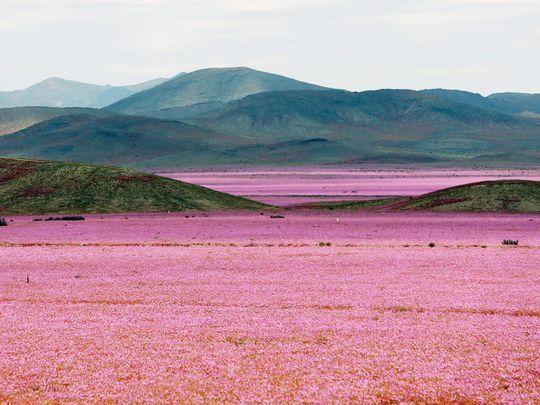 The Atacama region, 750 kilometers north of Santiago,
