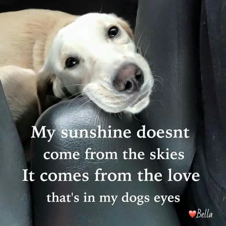 Funny dog quotes for kids - photo#41