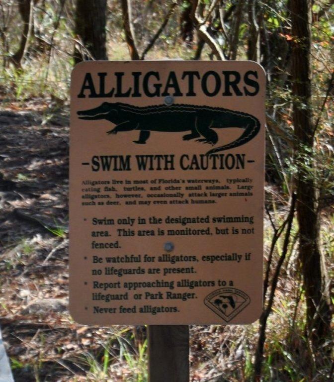 Perdido Key Rv Resort: 64 Best Fauna Images On Pinterest