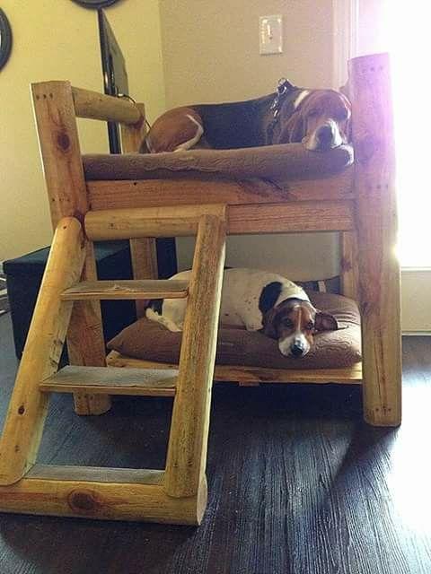 2 cute. Doggie bunk beds