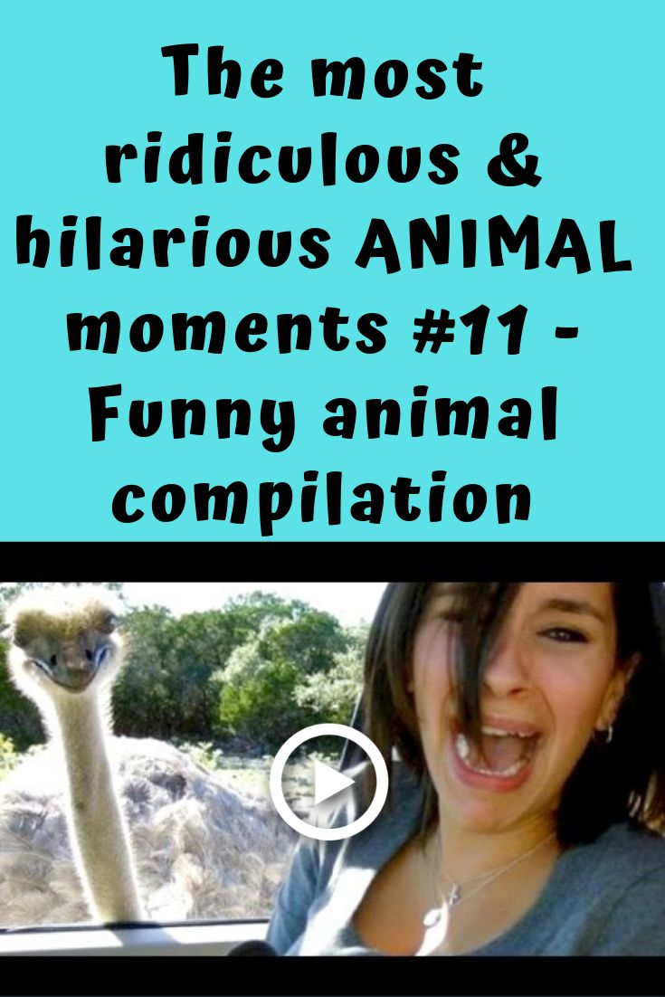 Animals and pets are fantastic and fun! There are so many fun moments with animals that make us laugh! See how all these dogs, puppies, cats, kittens,…