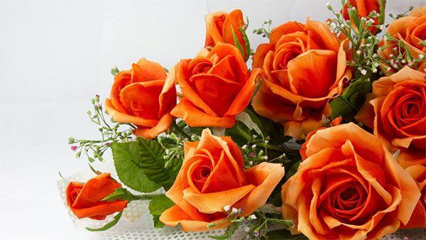 """Gyönyörű sárga rózsák, a szerelmi vágy """"hírnökei"""".. - https://www.hirmagazin.eu/gyonyoru-sarga-rozsak-a-szerelmi-vagy-hirnokei"""