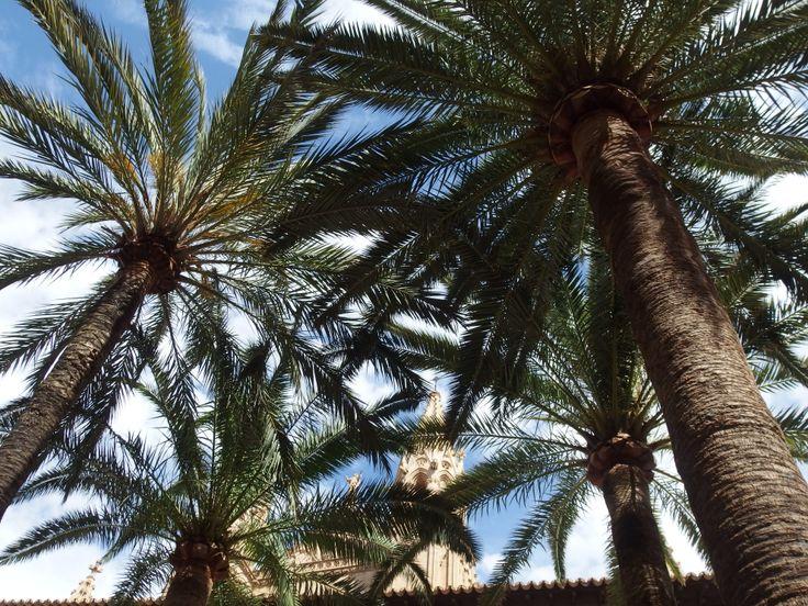 Palmu  palm tree