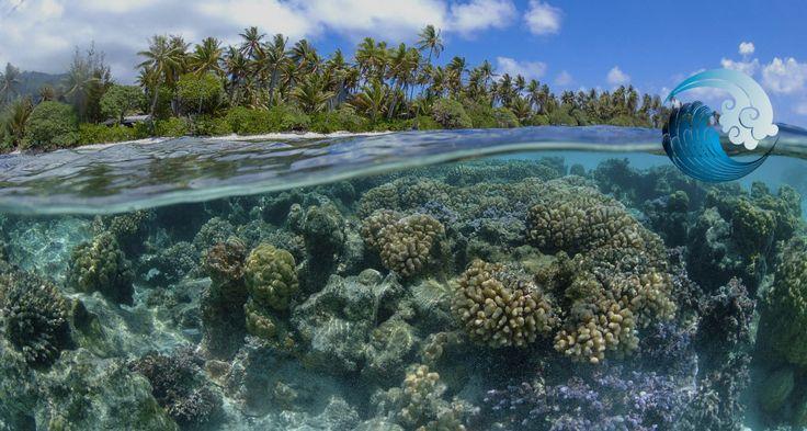 #OCEANFORCLIMATE Silencieusement, l'Océan subit les changements climatiques. La vie y est perturbée, risque de disparaître peu …