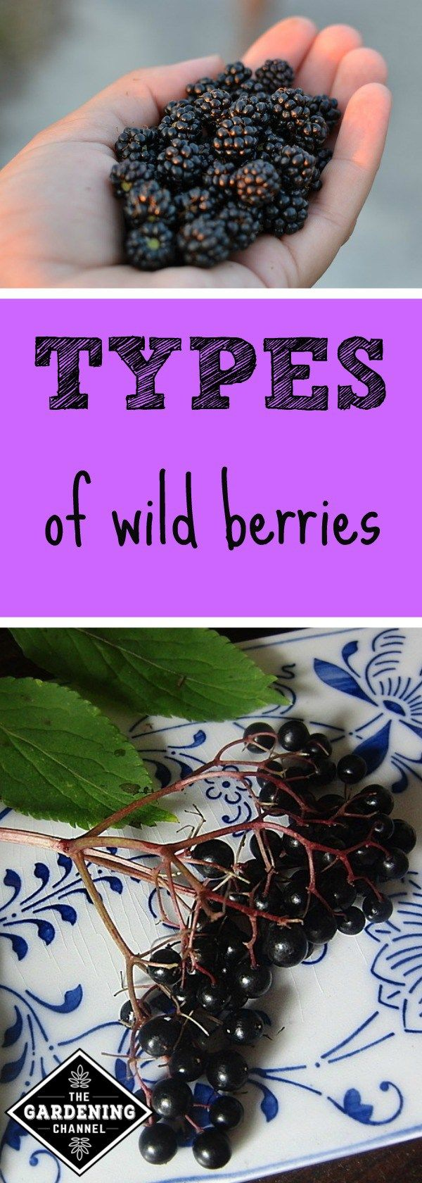 berries you can find in the wild