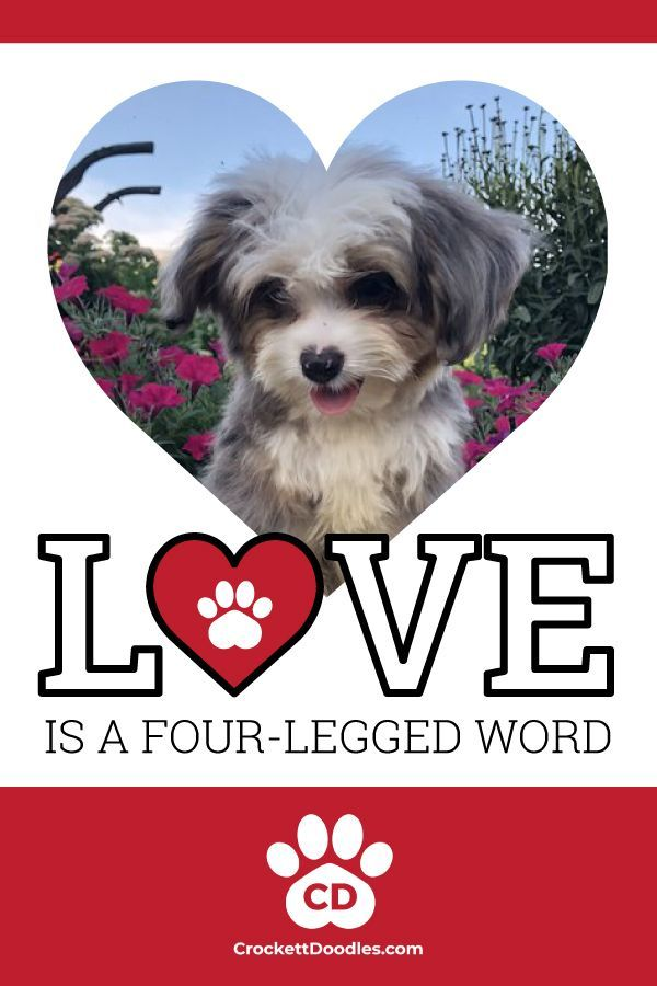 Pin By Jaydenmoon On Teacup Puppies Maltese Dog Lover Quotes