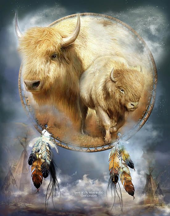 White Buffalo symbol of peace and harmony a divine messenger asking us to define the meaning and purpose of our life. Sacred spirit of abundance. If a white buffalo appears in our life it is a sign our prayers have been answered and all that we desire will be given. But only if we honor and respect all the offerings of Mother Nature and are grateful for the gifts we have already received.  Spirit Of The White Buffalo prose by Carol Cavalaris.