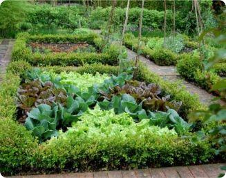 Métodos naturais para a proteção das hortas