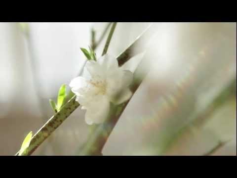 Trollbeads_Collezione_Primavera 2012