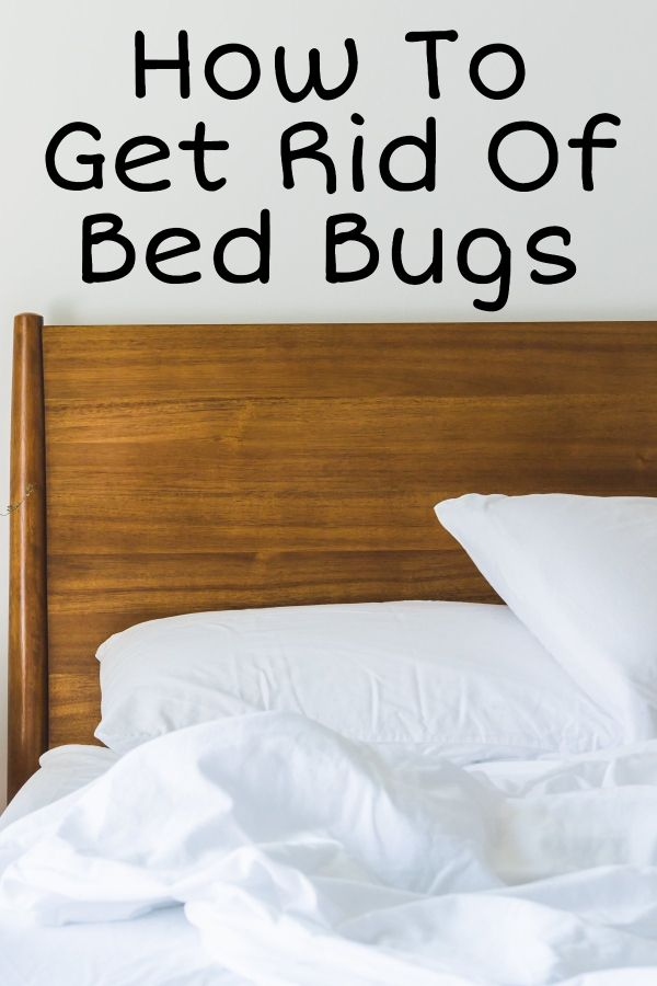 6 Tips To Prevent And Control Bed Bug Infestation Rid Of Bed Bugs Home Addition Plans Bed Bugs