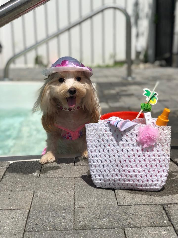 Dog Beach Bag Dog Hat Dog Photo Shoot Dog Pool Dog Photoshoot