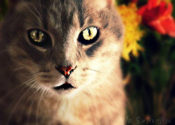 Fine Art Photography  felinebeautiful by VanillaExtinction on Etsy, $20.00: Gift Guide, Cat Photography, Favorite Etsy, Felin Cat, Tuesday Gifts, Photography Graysilvereyesgift, Gifts Guide, Etsy Courtesi, Etsy Treasuri