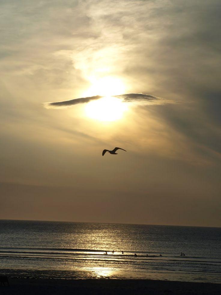 Cornish Chickpea: Sunset, Seagulls, Surfers and Shipwreck