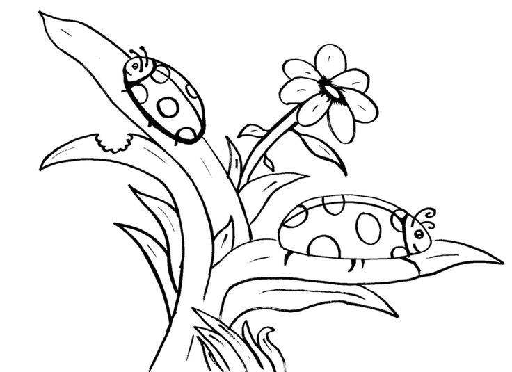 170 best Coloring Pages images on Pinterest | Coloring books ...