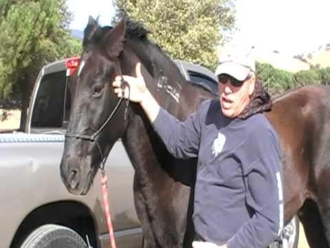 Proper fit of a Horse rope halter and cowboy halter - Rick Gore Horseman...