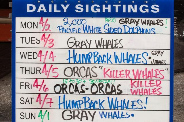 The Essential California Whale-Watching Guide: Whale Watching in Monterey.  Can't wait for April!!!