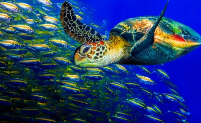 10 Surprising Facts About Turtles
