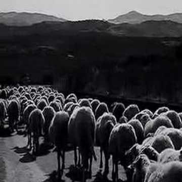 Cien ovejas
