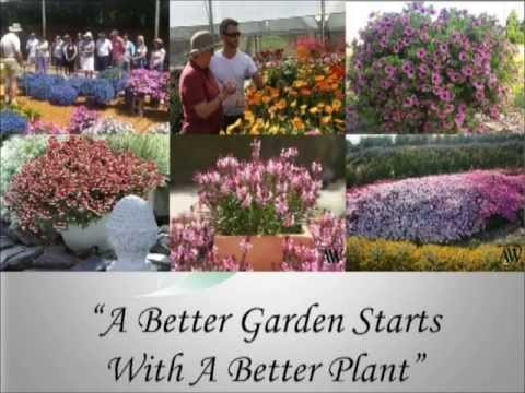 Aussie Winners - the history and story as to why our plants are exceptional. www.aussiewinners.com.au