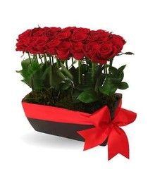 2 docenas de rosas rojas en base rectangular de cerámica con moño.                                                                                                                                                                                 Más