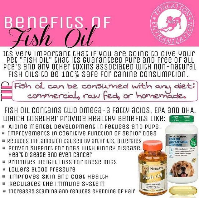 Benefits of fish oil for your dog pets pinterest for What are the benefits of fish oil