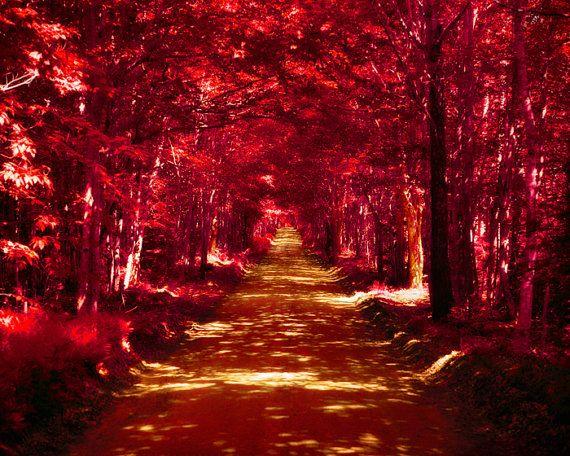 Autumn Leaves, Dark Red, Crimson, Red And Black