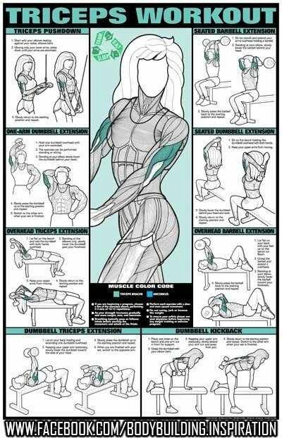 Another pinned said: Training triceps is really good for women to get rid of slappy arms :) I'm doing a lot of dips because it's nice to be able to lift my own weight (as with chin-ups).