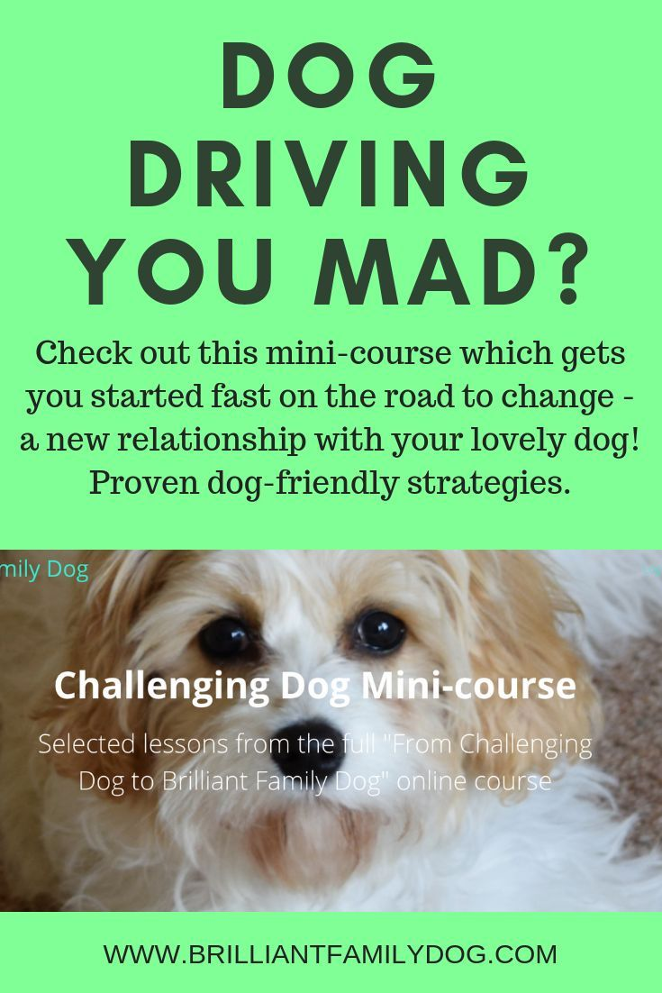 Dog Driving You Mad Find Out How To Make Your Dog The Best Ever