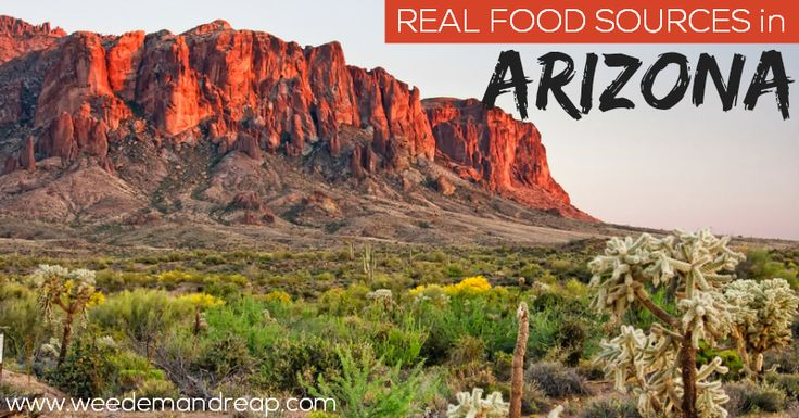 Real food sources in Arizona! #realfood #rawfood #rawmilk #sprouts #kefir #wildcaught #organic #sprouted