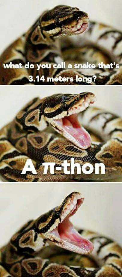 Funny quiz question ?  What do you name a snake that is 3 feet. 1 in.long ~ I named it ~ Onehellovabite 🐍