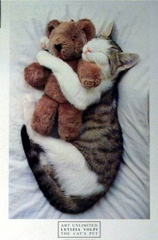 The Cats PetCat Pets, Funny Pictures, Teddy Bears, Sweets Dreams, Cat Naps, Sleep, Kitty, Animal Photos, Cat Photos